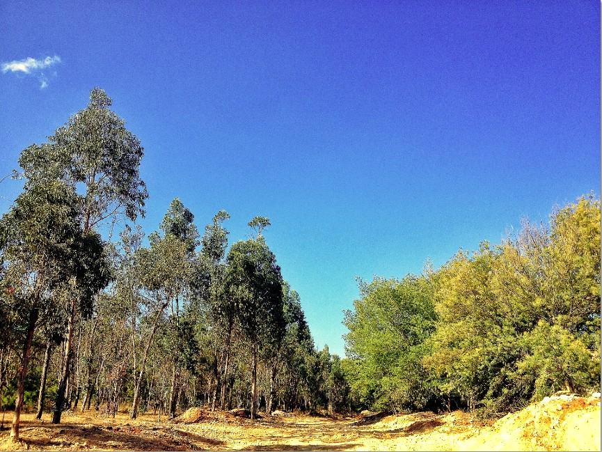 森林公园风景